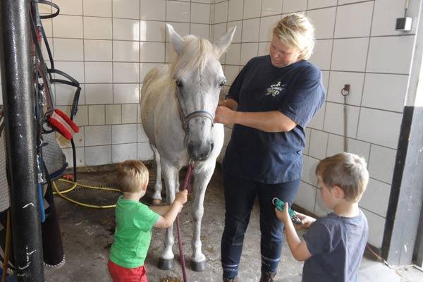 Paarden wassen met de kinderen